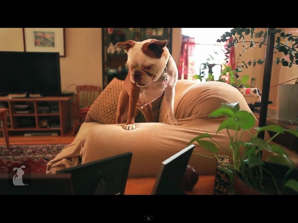 a2d28d1cf2e8376bd36df6ba0c6ef1f6 - Rolling in the Deep de Adele reinventada por un perro