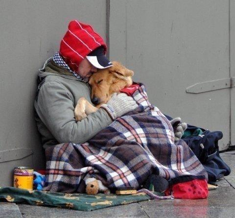 ae86f308ca90b4e8b7e0e71b400e7349 - Pruebas de que los animales tienen sentimientos