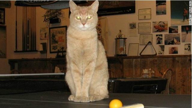 cff8309100d74138097dbac72872bcd2 - El alcalde de un pueblo de Alaska es un gato (un gato de verdad)