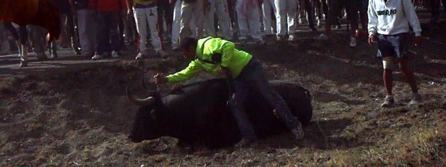 Antitaurinos lanceados en lugar del animal en la sangrienta fiesta del Toro de la Vega 16