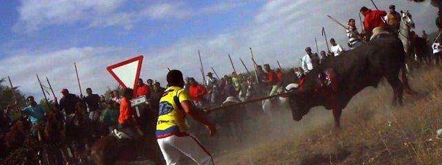 Antitaurinos lanceados en lugar del animal en la sangrienta fiesta del Toro de la Vega 20