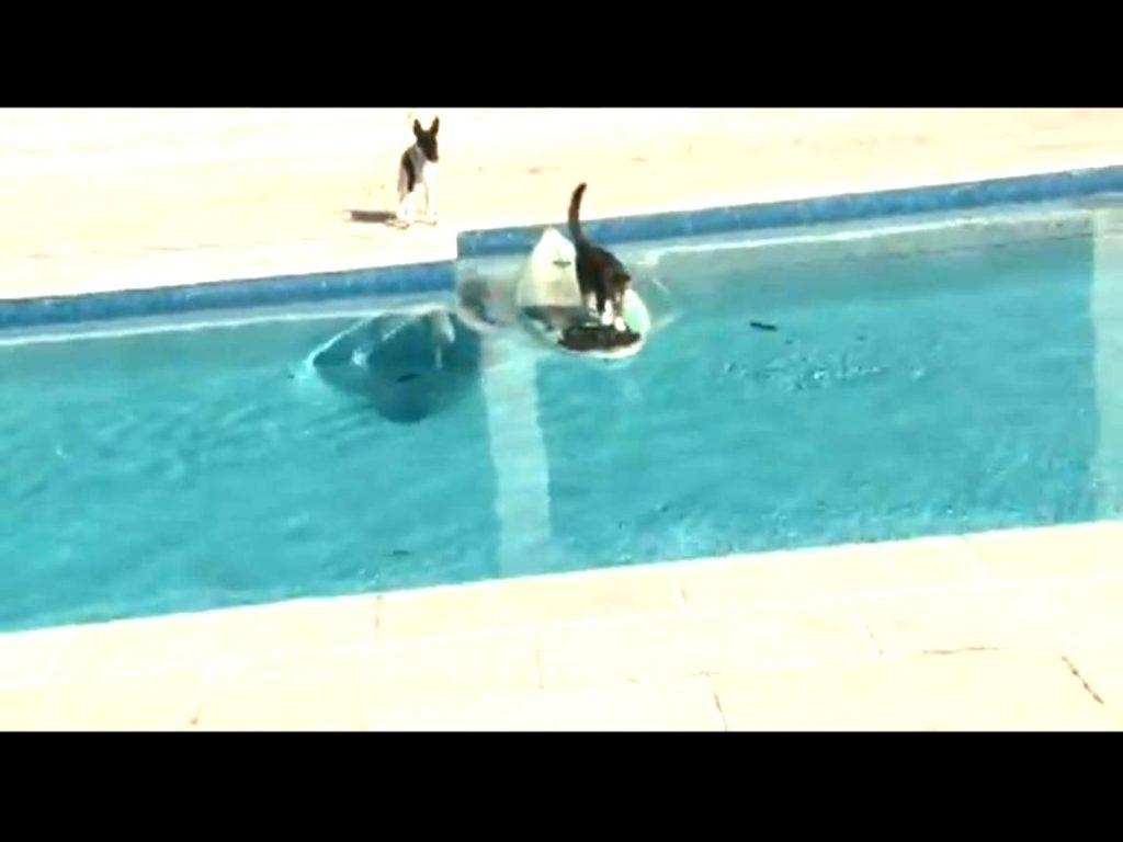 Gato escapa surfeando de un perro que lo persigue 2