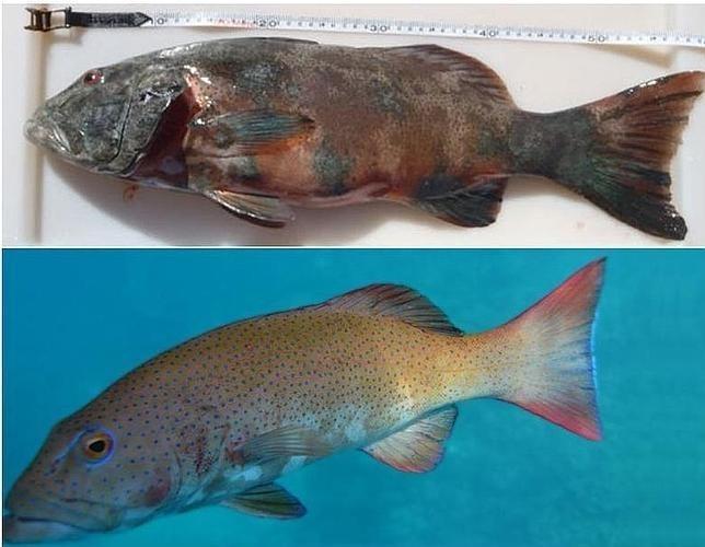 Aparecen los primeros peces con cáncer de piel 9