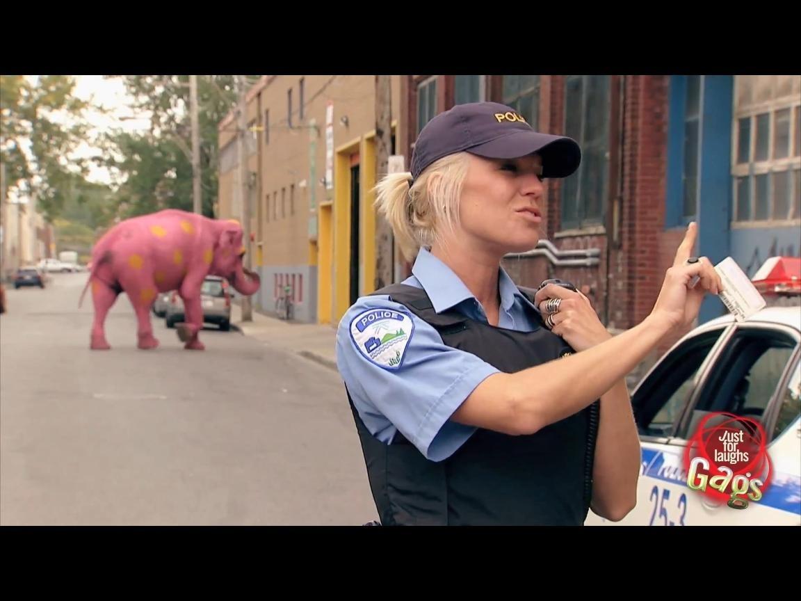 475f12d0f6109adbd522d72e06a83881 - Agente acabo de ver un Elefante rosa con lunares amarillos