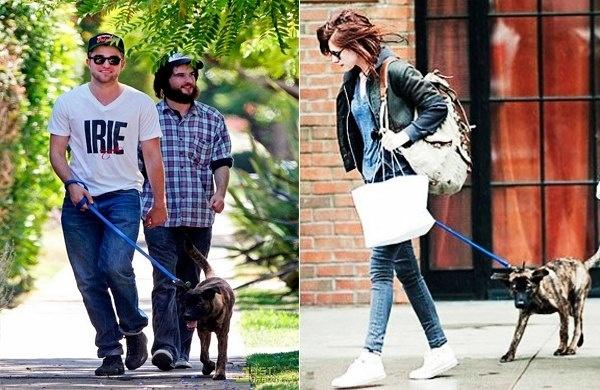 482a7b371171199f71b90226faaffe2e - Robert Pattinson y Kristen Stewart pelean por la custodia de su perro