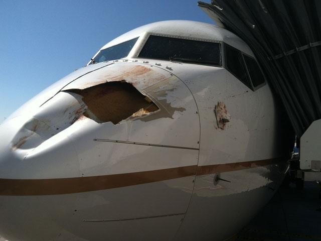 Impresionante impacto de un pájaro contra un Boeing que estaba aterrizaba 2