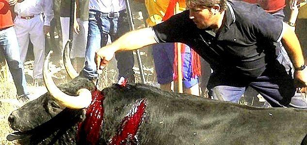 Antitaurinos lanceados en lugar del animal en la sangrienta fiesta del Toro de la Vega 15