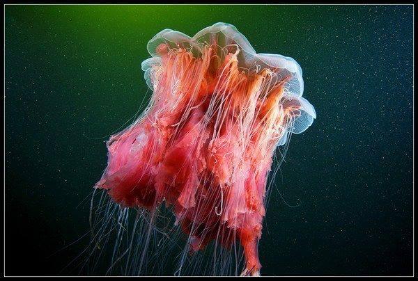 Fotografías submarinas que te dejarán perplejo 127