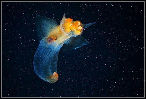 Fotografías submarinas que te dejarán perplejo 128