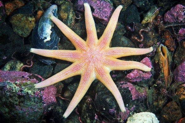 Fotografías submarinas que te dejarán perplejo 140