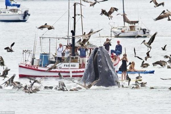 cbdc36bd56eef1b49a4218befad8fa79 - Fotografían una impresionante ballena en California, Estados Unidos
