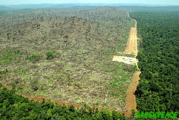 Bosque tropical arrasado en Indonesia - Las fotografías mas triste de la historia