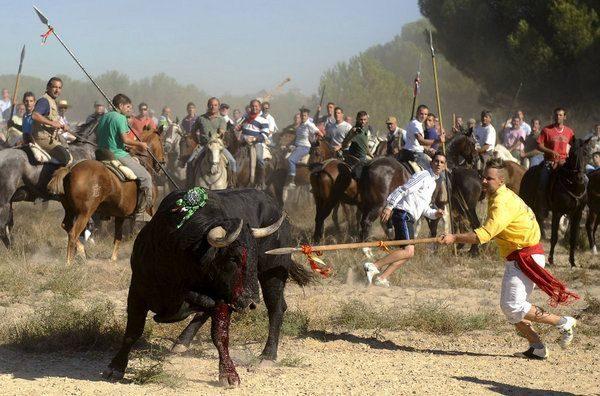 Antitaurinos lanceados en lugar del animal en la sangrienta fiesta del Toro de la Vega 19