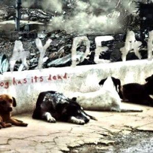 """""""Play Dead"""" Y si los perros fueran inmunes a los zombies 4"""