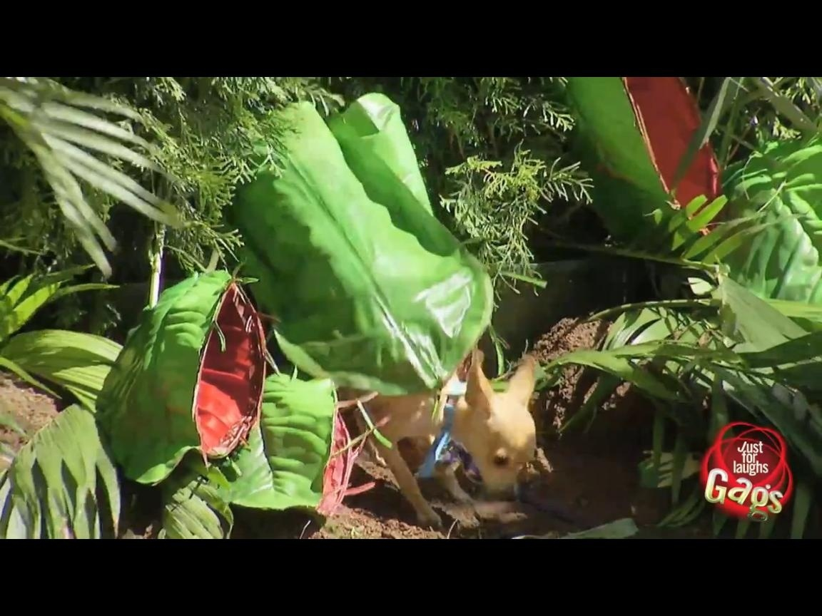 41b4b772185780c545f480dd3c440a9c - Planta carnívora se come un perro