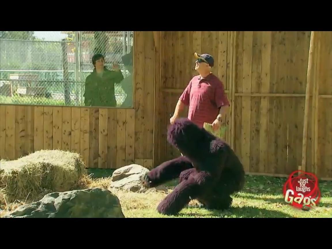 87a7ff7a4a8fb0e9da560f1cfab2bbd7 - Hombre ciego se pierde y entra en el recinto de los gorilas del zoo