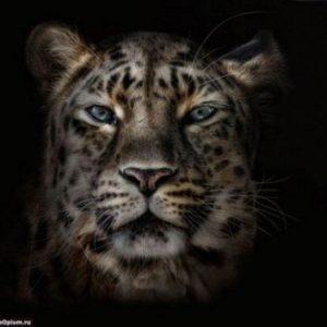 Fotografían a animales en extinción por si las futuras generaciones no llegan a verlos 23