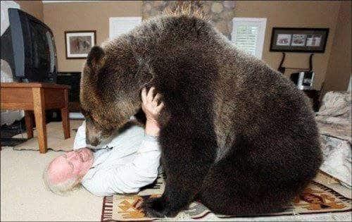 familia-tiene-un-oso-en-casa-1
