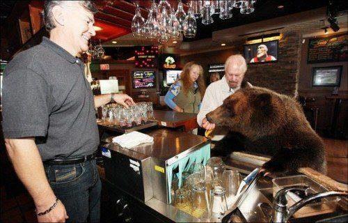 familia-tiene-un-oso-en-casa-2
