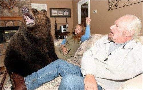 familia-tiene-un-oso-en-casa-3