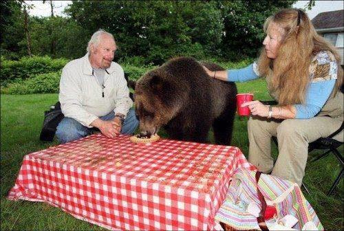 familia-tiene-un-oso-en-casa-5