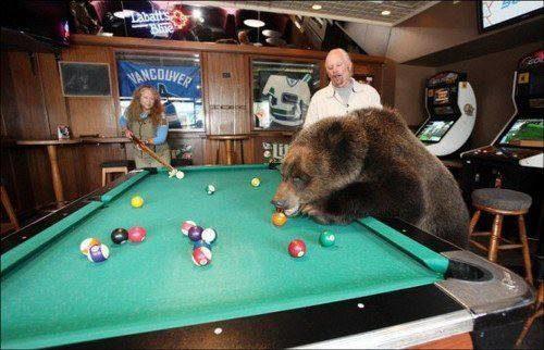 familia-tiene-un-oso-en-casa-8