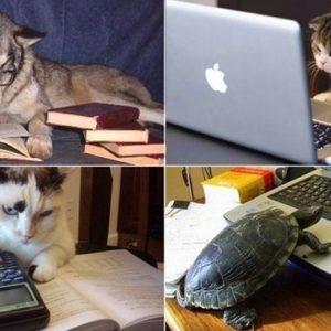 Las mascotas que les gusta leer en su tiempo libre 6