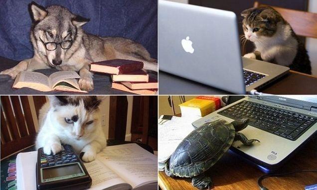 Las mascotas que les gusta leer en su tiempo libre 9