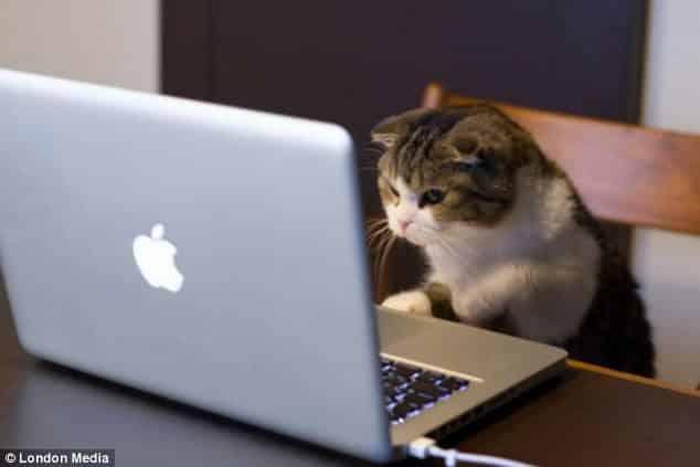Gato con portátil