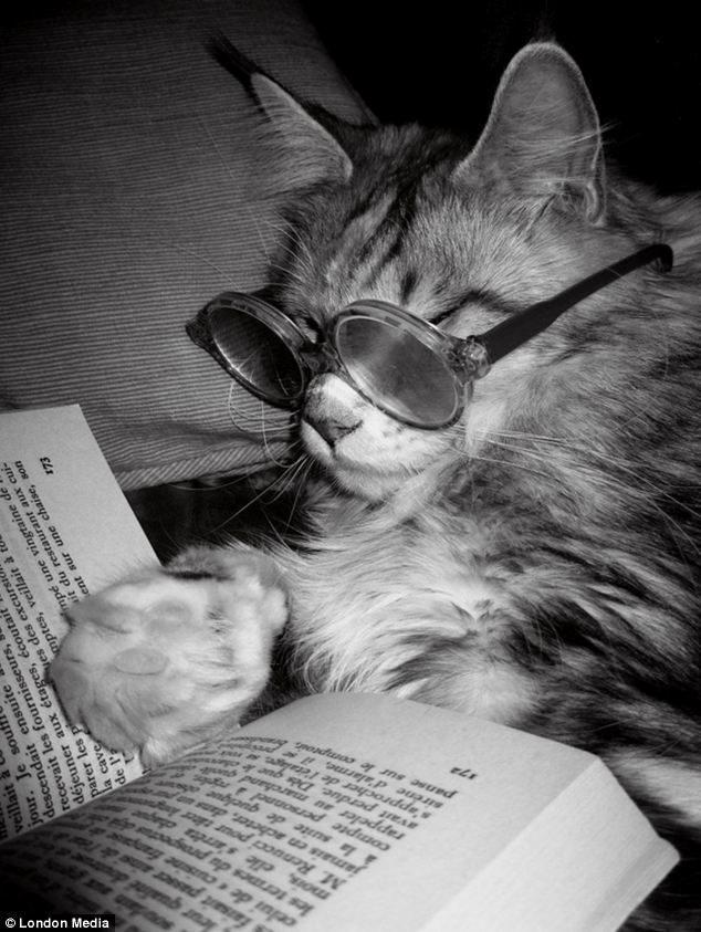 Gato leyendo un libro