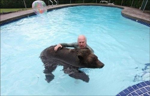 Un oso ? en casa ? 9