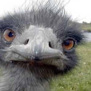 Un chino mata a mordiscos a un avestruz en un zoológico y se corta las venas 38