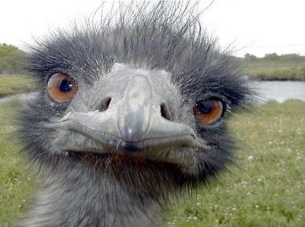 Un chino mata a mordiscos a un avestruz en un zoológico y se corta las venas 9