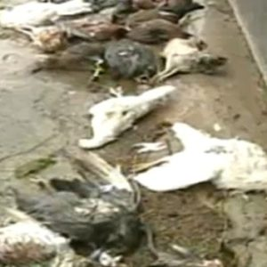 Supuesto chupacabras en Puerto Rico aterroriza a una familia 22
