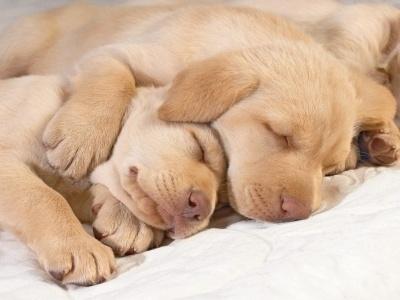 2338160a7cc88e5339f9d10742a77113 - 20 curiosidades sobre perros