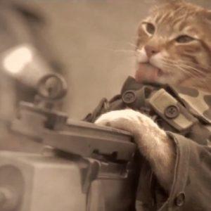 #Video Un gato gana la Medalla al Honor 29