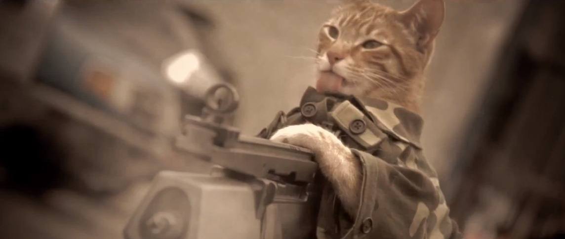 240105bef6ad8437498bbb0b2459e1c4 - #Video Un gato gana la Medalla al Honor