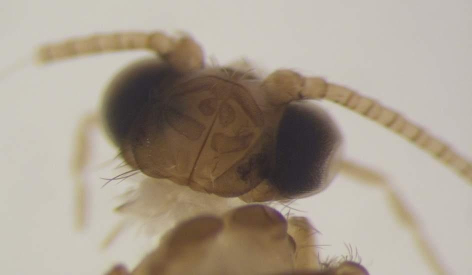 2add8384f1661c58873d6d3aebb128ac - Un grupo de científicos encuentra en Cádiz un insecto que se creía extinguido en Europa