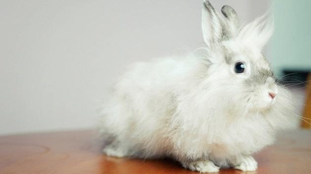 La Union Europea prohíbe probar productos cosméticos en animales antes de lanzarlos al mercado 9