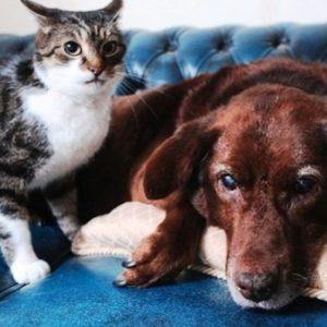 Amigos inseparables: un gato se convirtió en el protector de un perro ciego 6