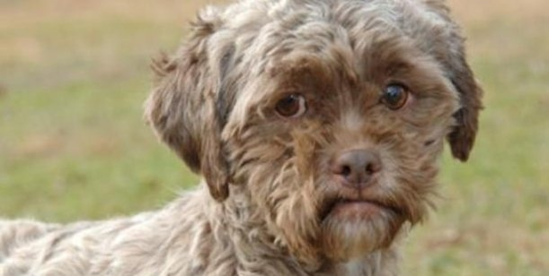 Abandonó a su perro porque tenía cara de humano 19