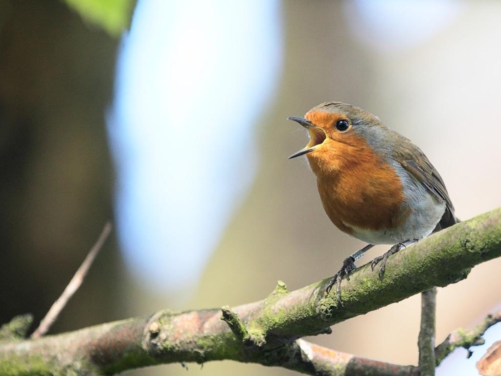 Surge nueva teoría sobre la evolución del lenguaje humano: provendría del canto de los pájaros 11
