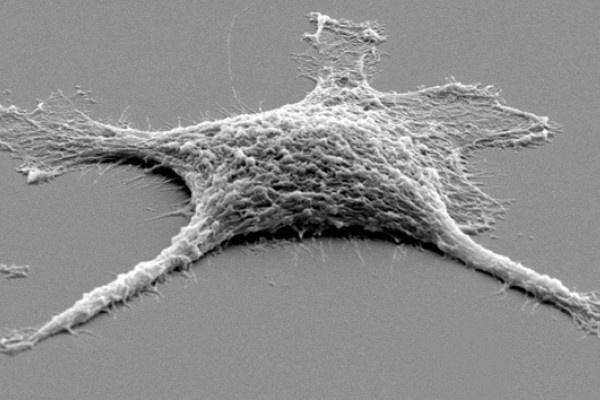 Crean una célula 'zombie' más resistente que las vivas 9
