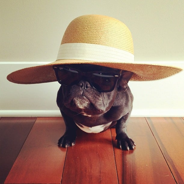 ▷ Trotter el bulldog frances mas gracioso de Instagram ? 20