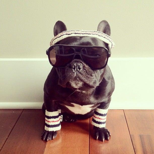 ▷ Trotter el bulldog frances mas gracioso de Instagram ? 21