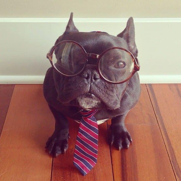 ▷ Trotter el bulldog frances mas gracioso de Instagram ? 23