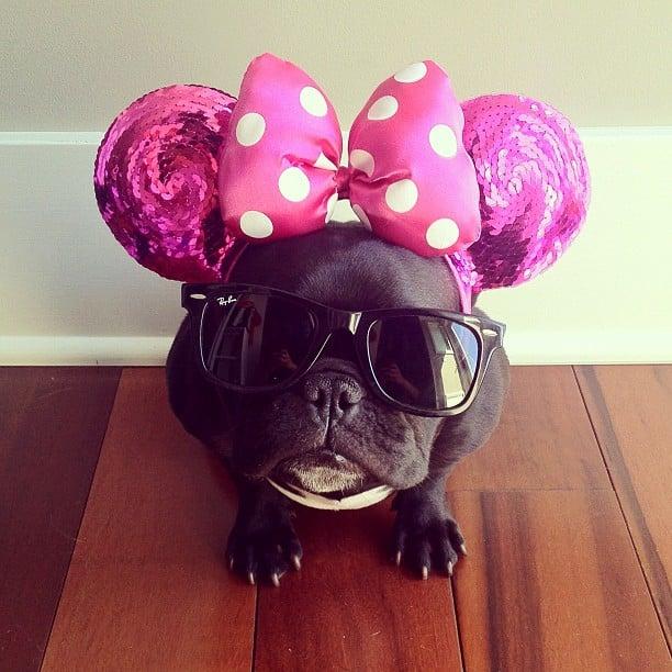 ▷ Trotter el bulldog frances mas gracioso de Instagram ? 26
