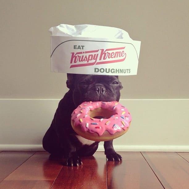 ▷ Trotter el bulldog frances mas gracioso de Instagram ? 27