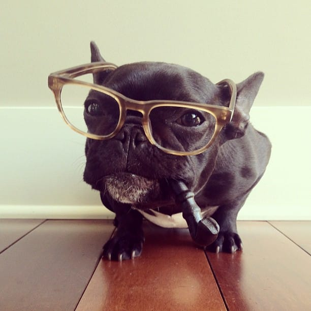 ▷ Trotter el bulldog frances mas gracioso de Instagram ? 28