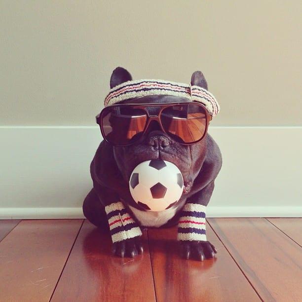 ▷ Trotter el bulldog frances mas gracioso de Instagram ? 29